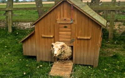 Living the Dream: Farmyard menagerie keeps us busy