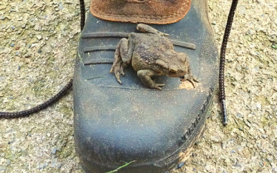Living the Dream:Mr. Toad tries to get some kip