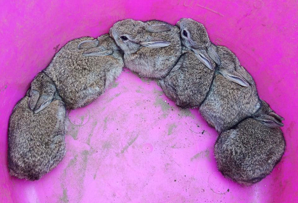 Living the Dream: We've unearthed some baby rabbits