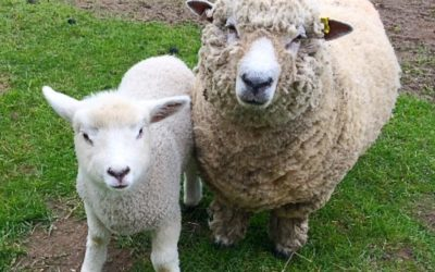 Living the Dream: Finding my voice after singing to sheep