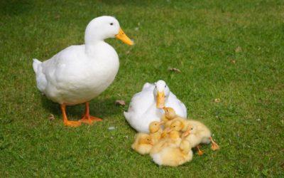 Living the Dream: More births down on the farm